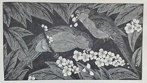 PARAKEET By Eric F Daglish Vintage Print C1931 English Artist