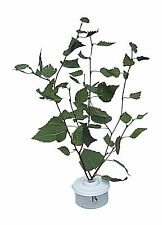 Stick Insect,Leaf Insect Cage,NEW Slimline Twig Pot Pair Keep Leaves Fresh
