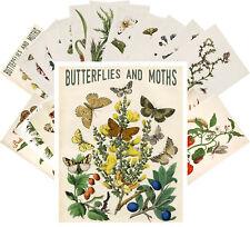 24 Postkarten Set * Butterflies und Moths Retro Book Magazine CC1055