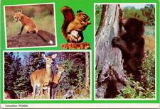 Canadian Wildlife Fox Black Bear Deer Squirrel 1970s Vintage Postcard F44