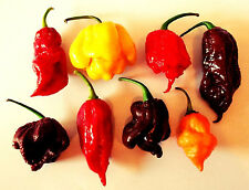 Semi Chili MIX MORUGA SCORPION 7 POT Bhut Jolokia 60 semi 6 SUPER HOT varietà