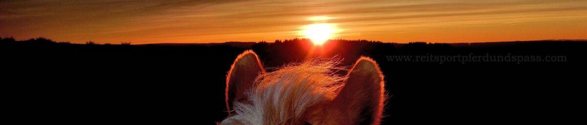Reitsport Pferd und Spass