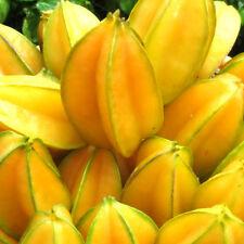 20 Seeds Star Fruit, Carambola, Thailand Exotic tree Seasonal Juicy Fruits