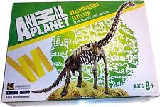 Brachiosaurus Skelett Bausatz 23 Teile Dinosaurierbausatz Animal Planet
