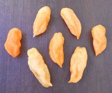 Bhut Jolokia Peach 1000 Samen **RARITÄT** BULK Seeds Chiliseeds