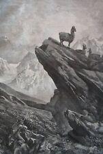 Guanaco hunting, llama.....wood engraving...1860s