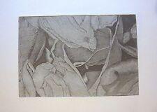 Tulipmania 19-edizione limitata firmato morsura da studio Angela
