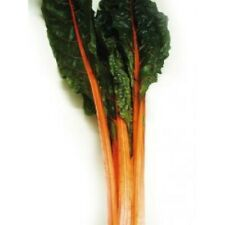 Swiss Chard Orange Fantasia 25 Seeds