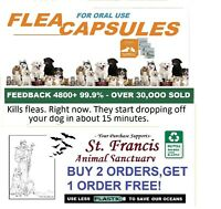 St. Francis Animal Rescue 15 MIN. SMALL FLEA Killer control dogs cats 16 doses