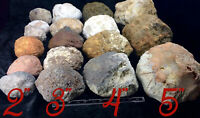 "4 + Gift Break Your Own Unopened Geodes 2"" 3"" 4"" 5""  Whole Kentucky Crystal Gem"