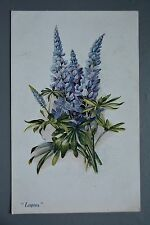 R&L Postcard: Vivian Mansell, Lupins Flowers