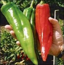 25 NEW MEXICO BIG JIM PEPPER SEEDS HEIRLOOM 2018 (non-gmo heirloom seed)