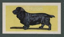 Field Spaniel Dog Canine Pet Animal Trade Ad Card