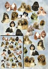 Shih Tzu Dog Gift Wrapping Paper By Starprint