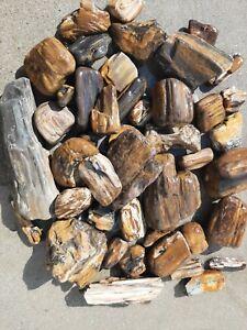 Petrified Wood Lot Rough Wyoming/Montana