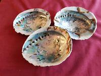 Abalone Räuchermuschel Räucherschale Seifenschale Seeohren Haliotis