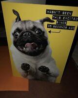 Pug Dog Funny Happy Birthday Card & Envelope By Shoebox Hallmark