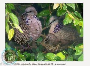 © ART - Spotted Turtle Dove - Nest - Original wildlife Bird Artist Print by Di