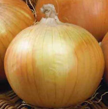 Texas Early Grano Onions,Big, Sweet & Tasty! Free Shipping!