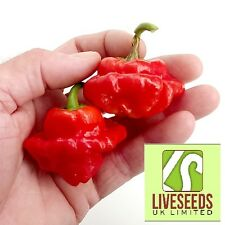 Red CHILLI PEPPER seeds squash x 10-liveseeds -