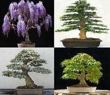 Mix of 40 tree seeds. 10 of each variety. Tree seeds that can be used for bonsai