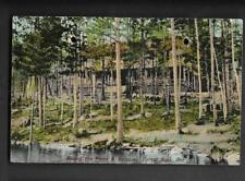 pk34808:Postcard-Among the Pines & Balsams,Forest Nook,Ontario
