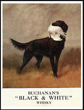 FLAT COATED RETRIEVER ON WHISKY ADVERT LOVELY VINTAGE STYLE DOG PRINT POSTER