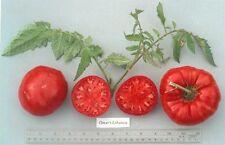 VEGETABLE TOMATO OMARS LEBANESE 40 FINEST SEEDS