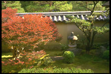 334005 Kyoto temple Garden With Red Maple Tree A4 Photo Print