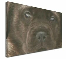 More details for bullmastiff puppy x-large 30