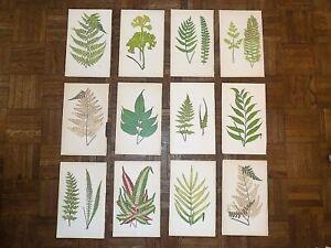 Antique 19th Century Botanical Wood Engravings - Ferns - Set of 12