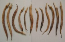 """12 Se Tennesse Oven Dried Okra Pods Rare 25 Years Old-5""""-9.5""""-#14"""