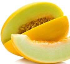 Canary Melon Seeds!  SWEET YELLOW VARIETY! COMB. S/H! SEE MY STORE!