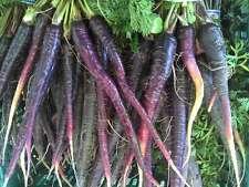 Carrot Seeds - PURPLE HAZE -  Deep Purple Outside-Bright Orange Inside- 50 Seeds