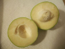 Ten (10) seeds - White sapote (Casimiroa edulis) soft, sweet, delicious fruit!