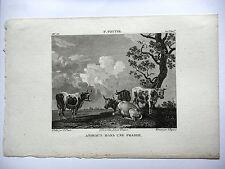 GRAVURE ANCIENNE 19e - ANIMAUX DANS LA PRAIRIE