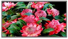 """Display NEU 15.6"""" HD+ LED MATTE 1600x900 FOR IBM LENOVO THINKPAD W530 T530 L530"""