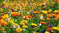 Ringelblumen Mischung 🦋 Bienenweide 7Sorten Heilpflanze Calendula 🐝 +1200Samen