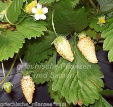 100 stücke Jaboticaba Samen Obst Samen Bonsai Traubenbaum Pflanzensamen 35DI