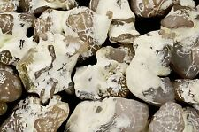 "Snake Skin Agate 2"" 2-3 Oz Polished Rock Mineral Chakra Metaphysical Healing"