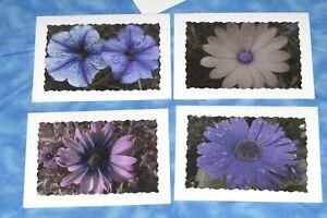 4 SYMPATHY Flower Photo Cards, 5X7 cards, Purple flowers, B&W Photography