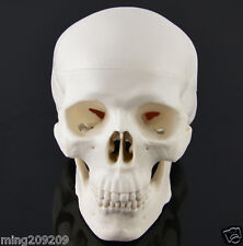 Skull Unique White Hand made  Human Resin Skull Medical Replica Cranium SK-5523