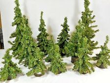 G SCALE SCENERY PINE TREES ~ (12) TOTAL   #5