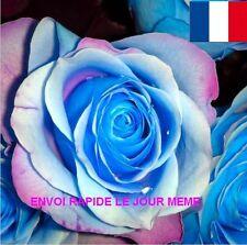 10 GRAINES DE FLEURS ROSIER RARE DRAGON BLEU EN EXPEDITION RAPIDE DEPUIS LA FR