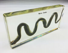 Real Snake Specimens In Lucite Paperweight Education/Gift/Collection/Decoration