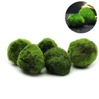 3-5cm Quarium Landscape Marimo Live Moss Balls Algae Fish Tank Ornaments Decor