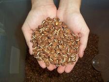"LabLab Seeds ""The Magic Bean""  Food Plot"" 1/4 Lbs Sampler"