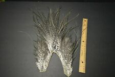 Lot 468,   Grizzly Rooster Saddle Piece Feathers Fly Tying