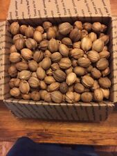 New listing 12 Pounds North Georgia Organic Unshelled Hickory Nuts