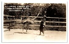 Rppc Woman Feeding Ostrich Oranges, Jacksonville, Fl Alligator Farm Postcard *5A